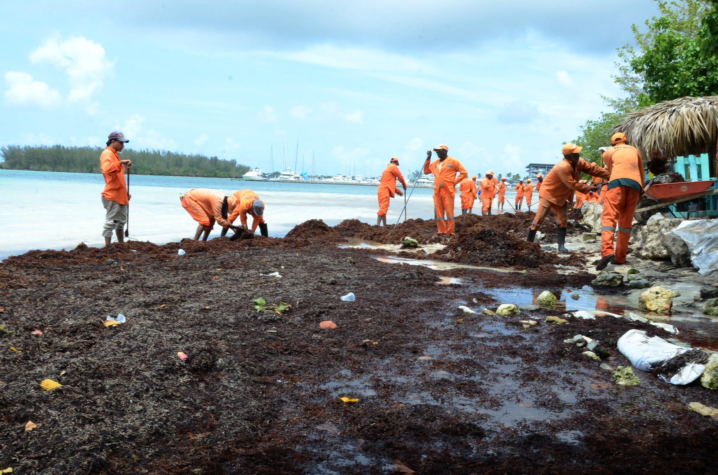 6.  La presencia de esa alga está disminuyendo entre 50 y 60% las visitas a esa playa. foto José de León