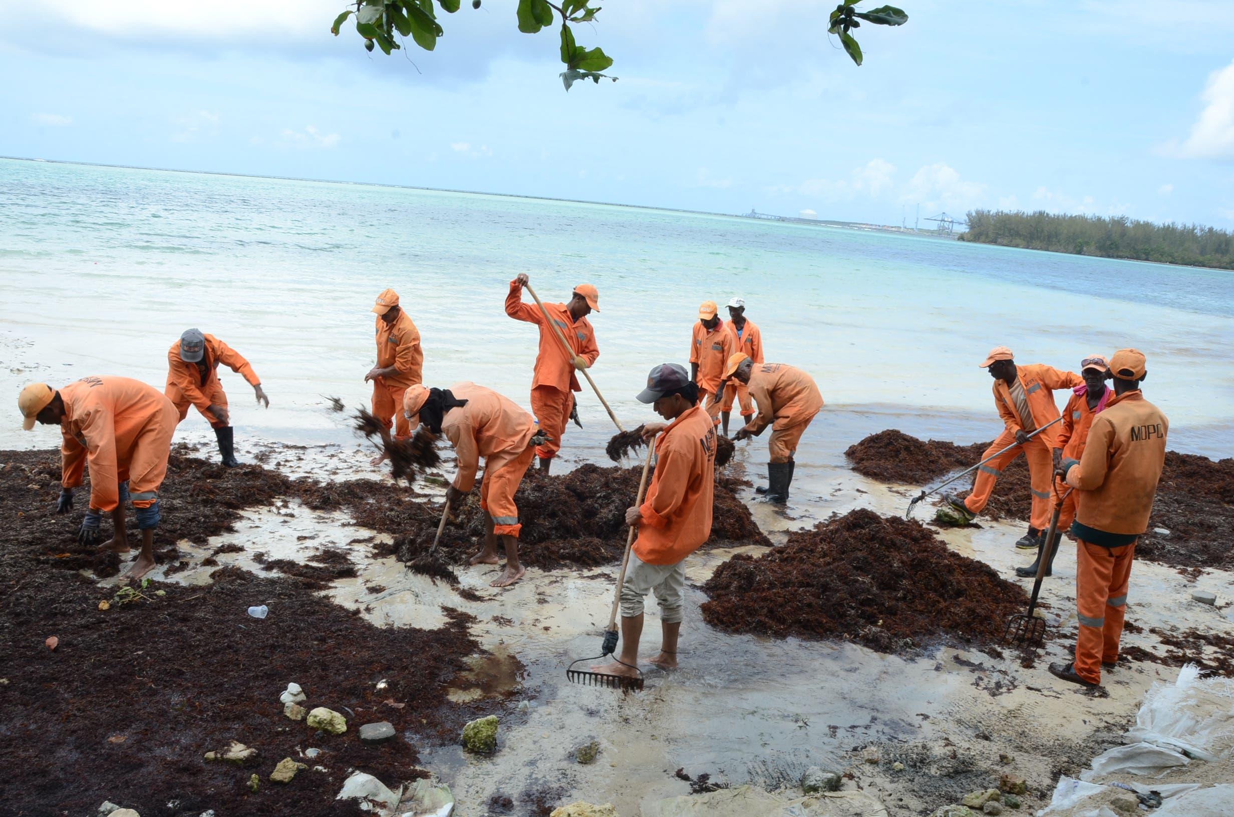 2. Los sargazos que afectan la  playa de Boca Chica han sido retirados en un 70%.  /foto Jose de Leon