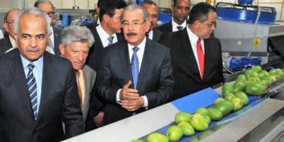 El presidente Danilo Medina y el ministro de Agricultura observan el proceso de empacado para exportación.  fuente externa