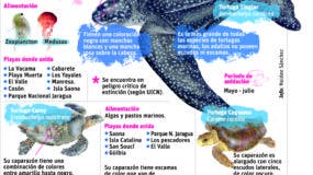 info-tortugas