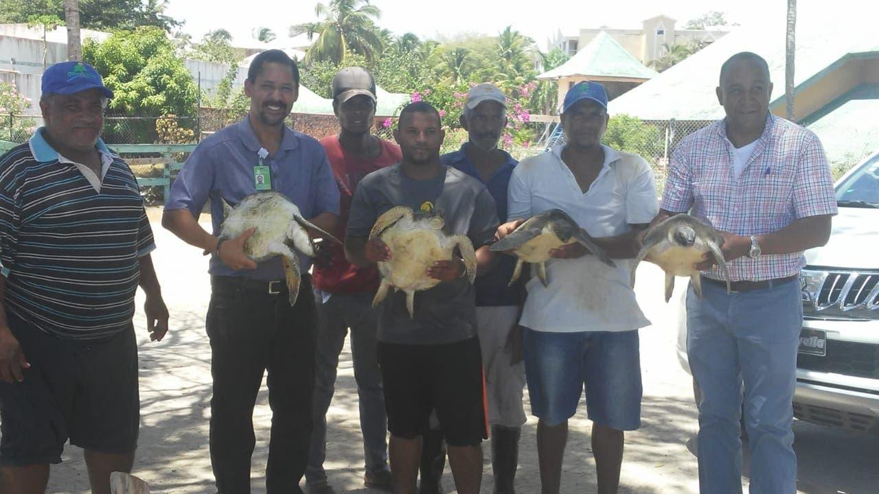 autoridades-liberan-en-playa-grande-de-luperon-4-tortugas-marinas-que-estaban-en-cautiverio