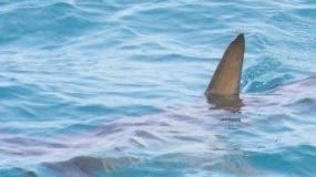 El perro mordió al tiburón en las branquias.