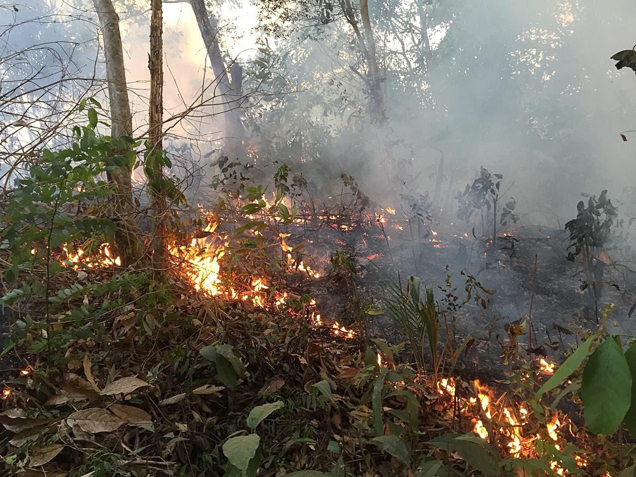 Una de las capitales de la Amazonía brasileña amanece cubierta de humo