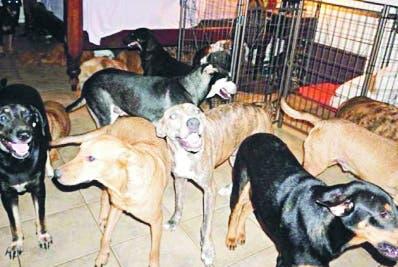 Refugió 97 perros callejeros durante Dorian