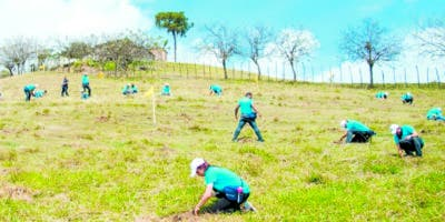 La reforestación por parte empleados  son de sus acciones.