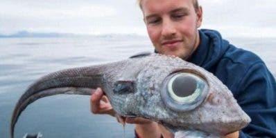 Viven en aguas profundas y rara vez son capturados.