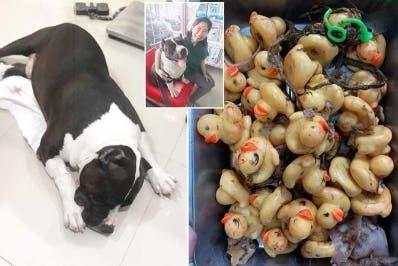 El perro  fue llevado  a una clínica veterinaria cercana.