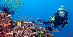 El solo tocar los arrecifes coralinos puede  afectarlos.