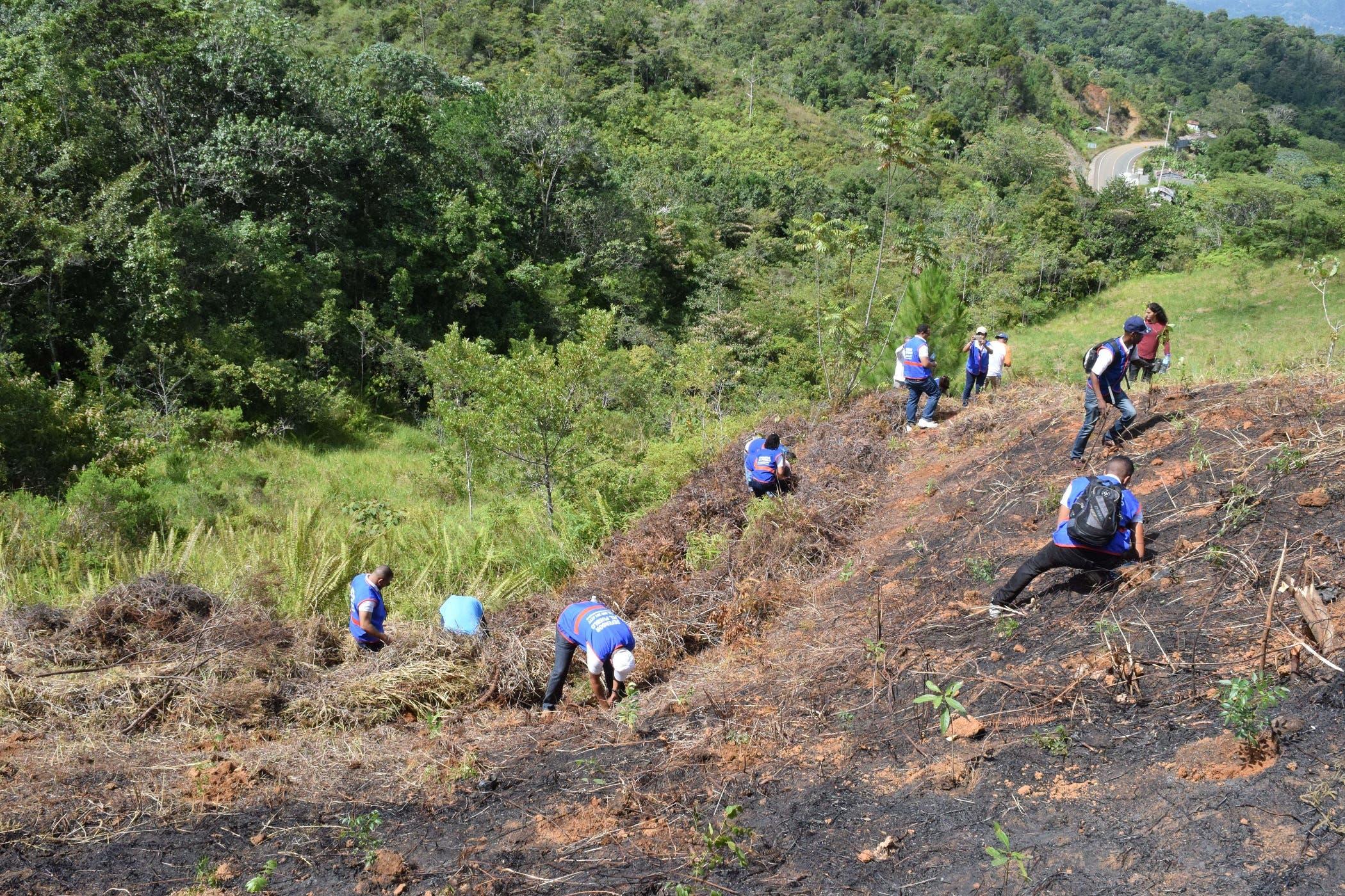 Los árboles fueron sembrados en las montañas El Firme y Rancho Arriba de San José de Ocoa.