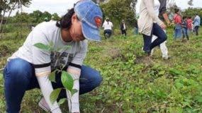 En  la presente jornada de reforestación serán  hincadas  un millón 400 plántulas.