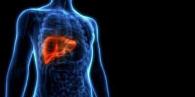 El hígado es el órgano más grande del cuerpo humano.