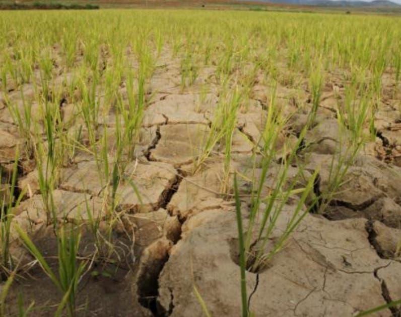 La sequía afecta nueva vez al país