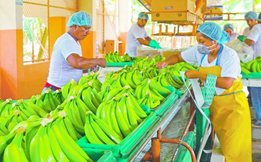 Exportaciones del agro caen 28.4%