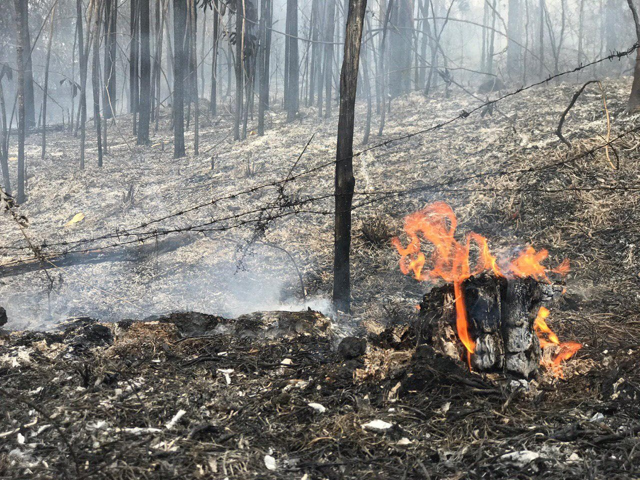 Coalición denuncia incendios forestales y corte de árboles en la línea Noroeste
