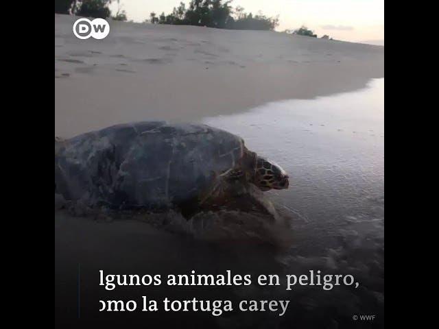 Vuelven los animales
