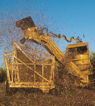 Central Romana  logra 382 mil  toneladas azúcar
