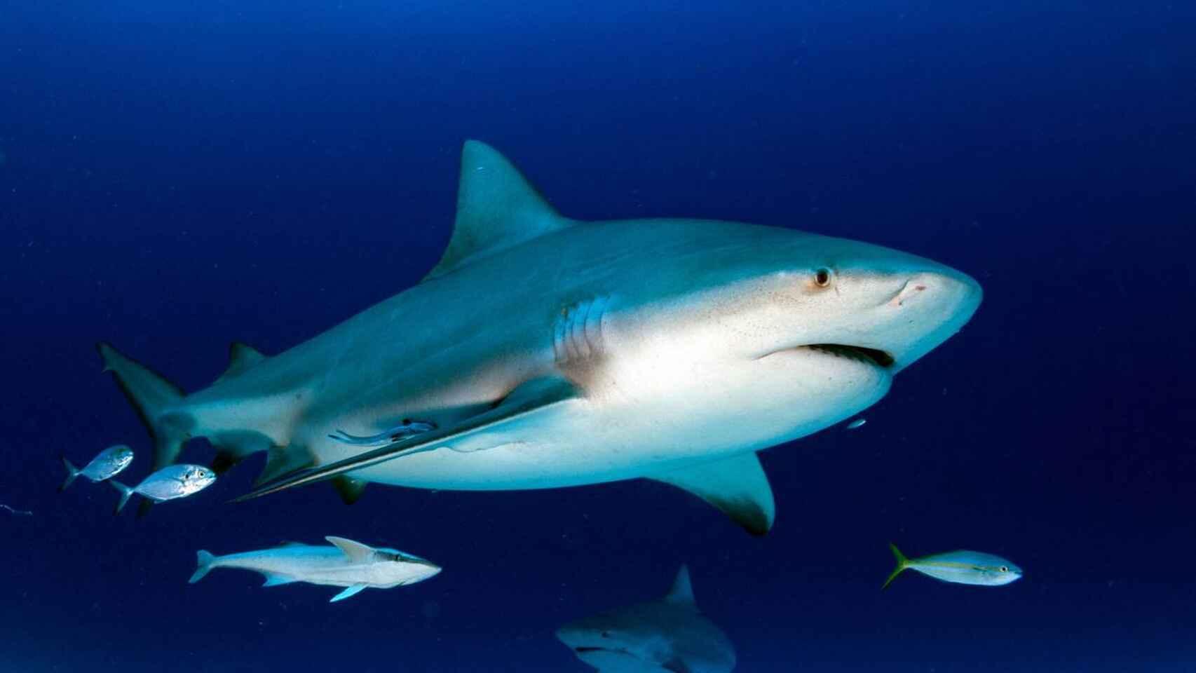 Un tiburón muerde a un niño de 11 años en una playa de Florida