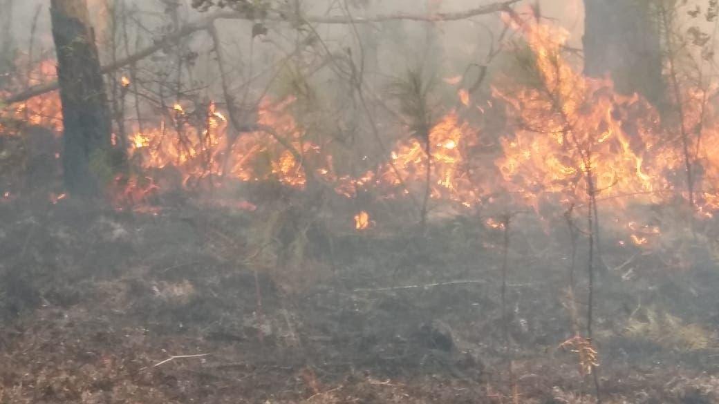 Autoridades combaten incendio forestal en Bahoruco