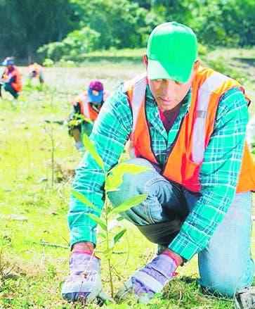 Falcondo realiza jornada por  Mes de la  Reforestación