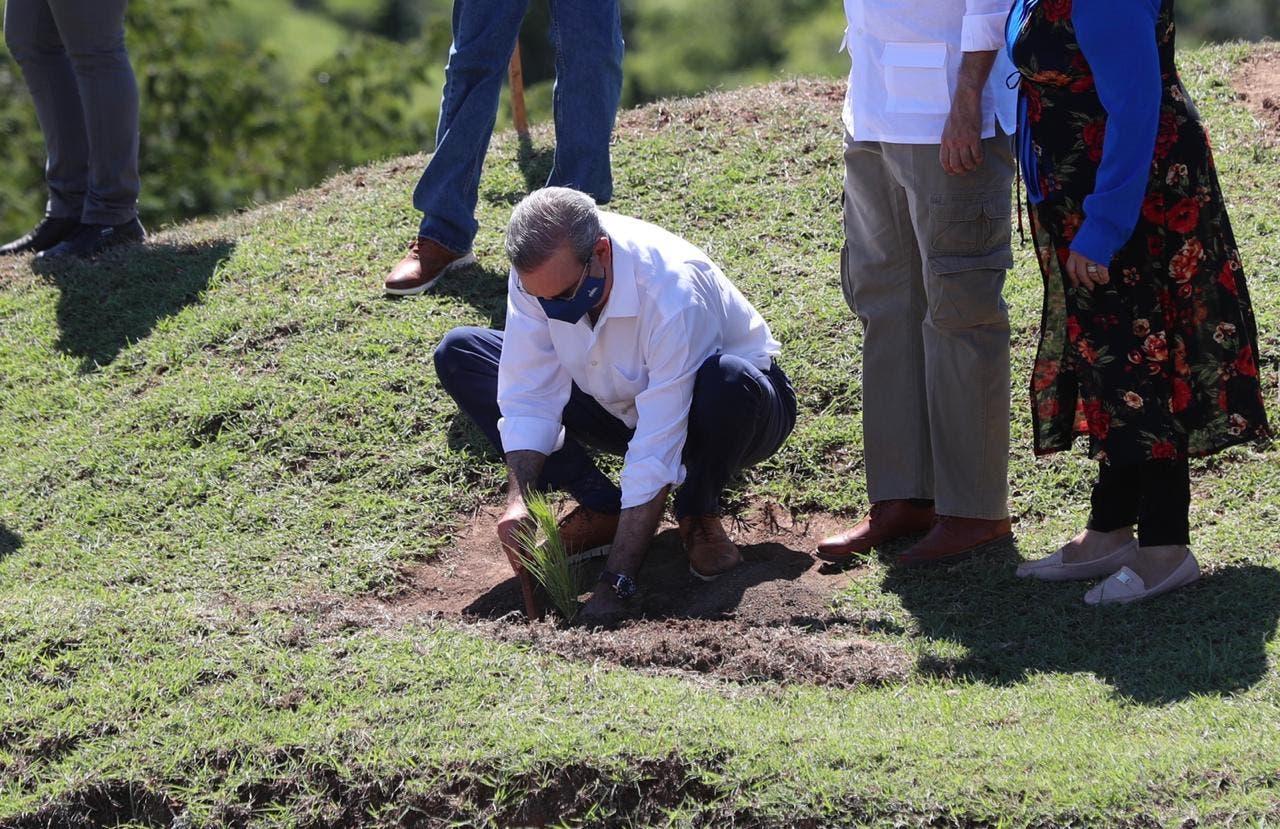 Presidente Luis Abinader encabeza jornada de reforestación