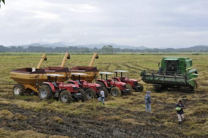 La FAO prevé fuertes disminuciones de las reservas mundiales de cereales