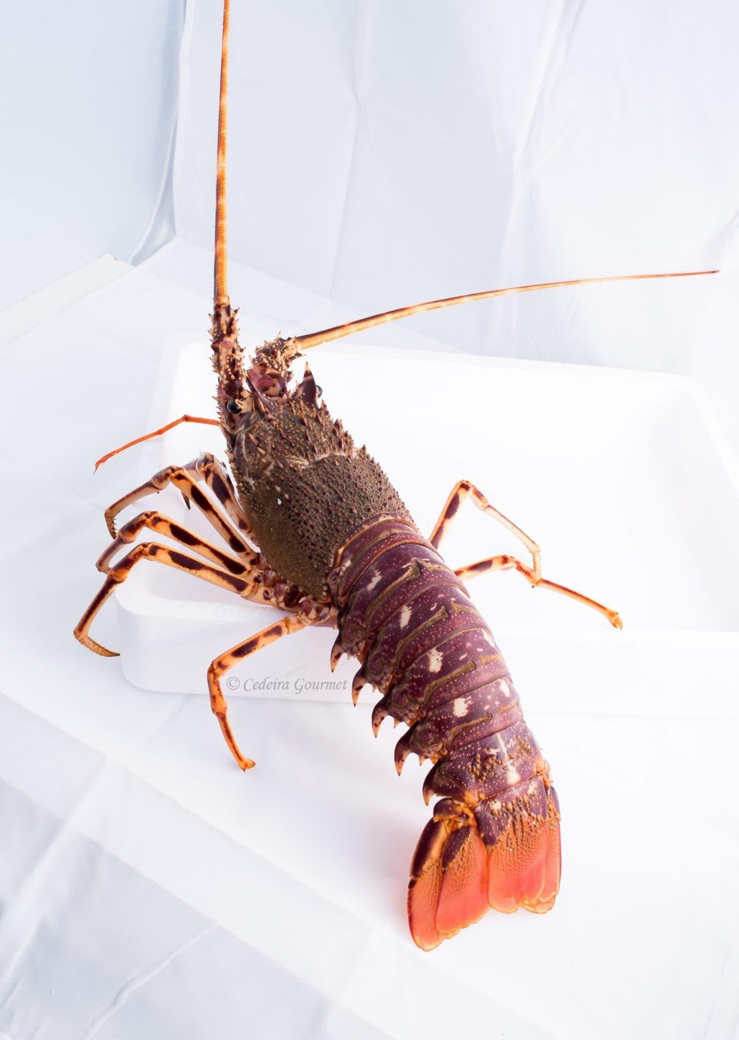 Langostas y cangrejos,  en veda hasta final de junio