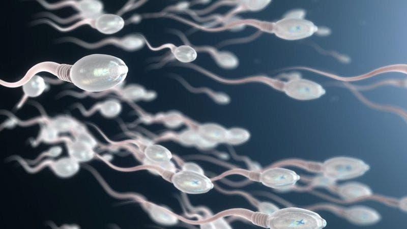 «El efecto de los químicos en nuestro sistema reproductivo amenaza la supervivencia humana»: Shanna Swan, epidemióloga autora de «Cuenta atrás»