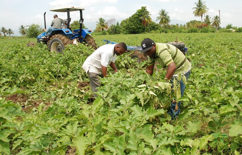 El IICA promoverá políticas agropecuarias sostenibles