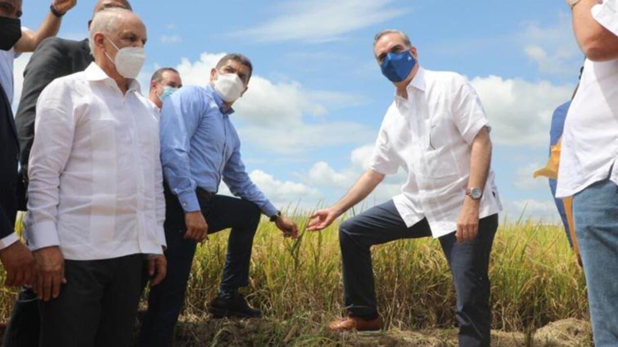 Precio y abastecimiento arroz están garantizados