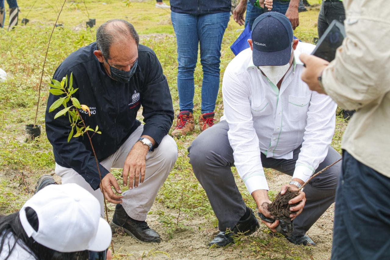 Medio Ambiente planta 1,000 mangles y uvas de playa