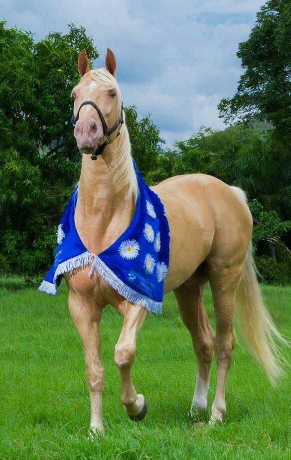 Piden a diputados aprobar proyecto que declara al caballo de paso Higueyano raza nacional