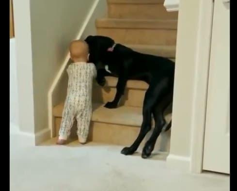 Viral: Perro bloquea el paso de un bebé e impide suba unas escaleras