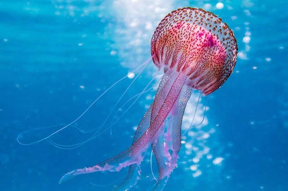 Conoce las características de una Medusa, nombre dado a nueva operación de la PGR