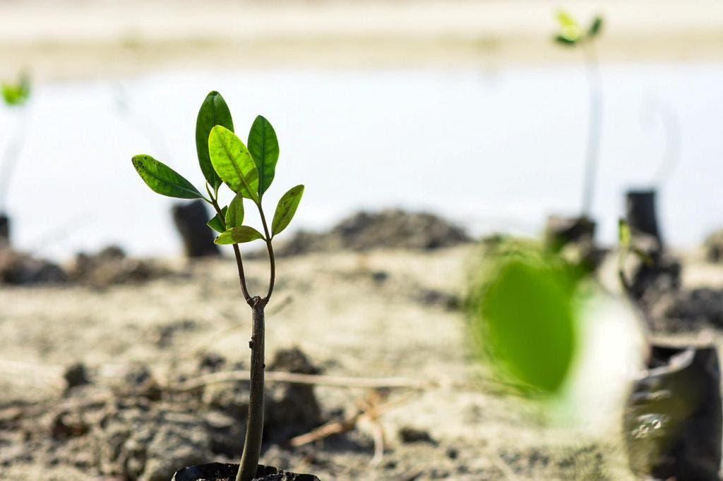 Medio Ambiente insta a la población a cuidar los manglares
