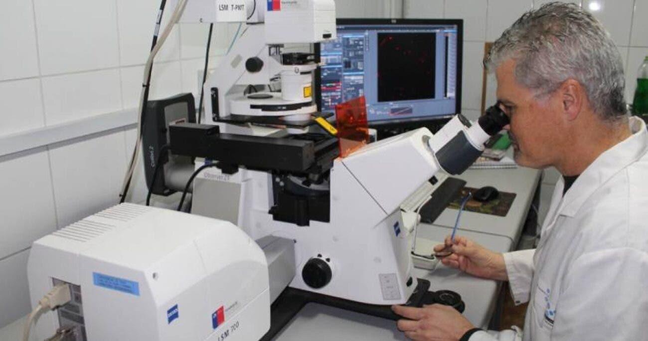 Chilenos proponen tratamiento contra el alzhéimer con nanopartículas de oro