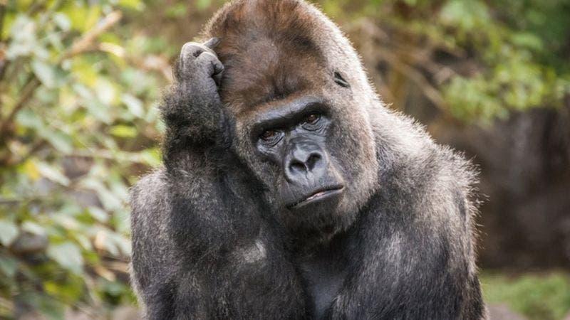 Por qué los animales reconocen números pero sólo los humanos pueden hacer matemáticas