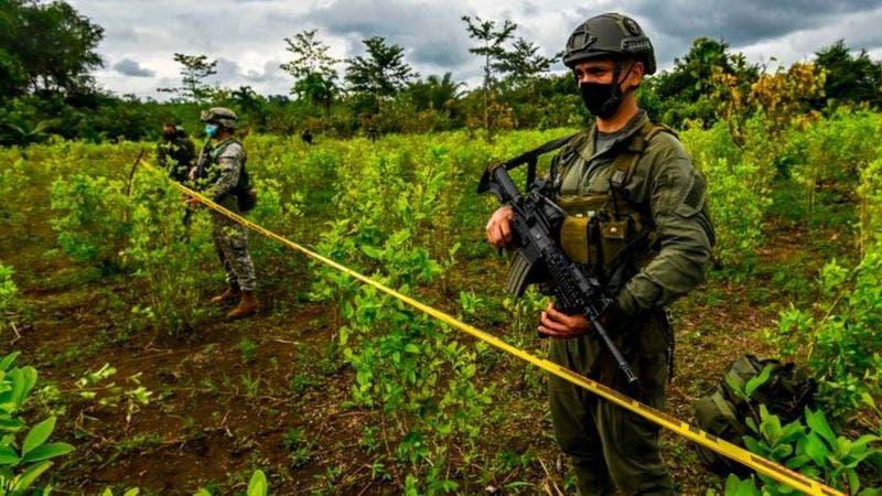 Por qué en Colombia se está produciendo más cocaína si hay menos coca