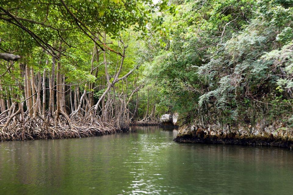 Proteger Parques Nacionales fundamental para frenar Cambio Climático