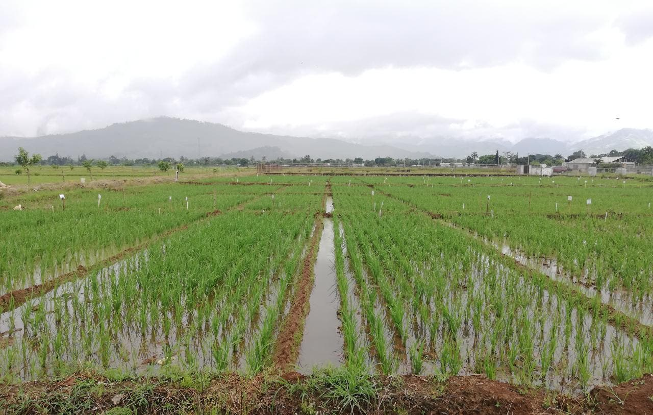 Tormenta tropical Fred no causó daños al sector agrícola, dice Agricultura
