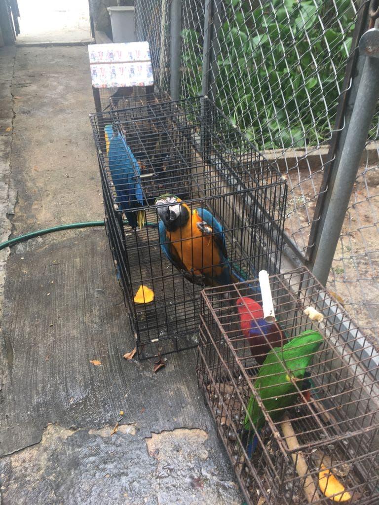 Arrestan a dos personas por introducción y explotación de animales exóticos en Punta Cana