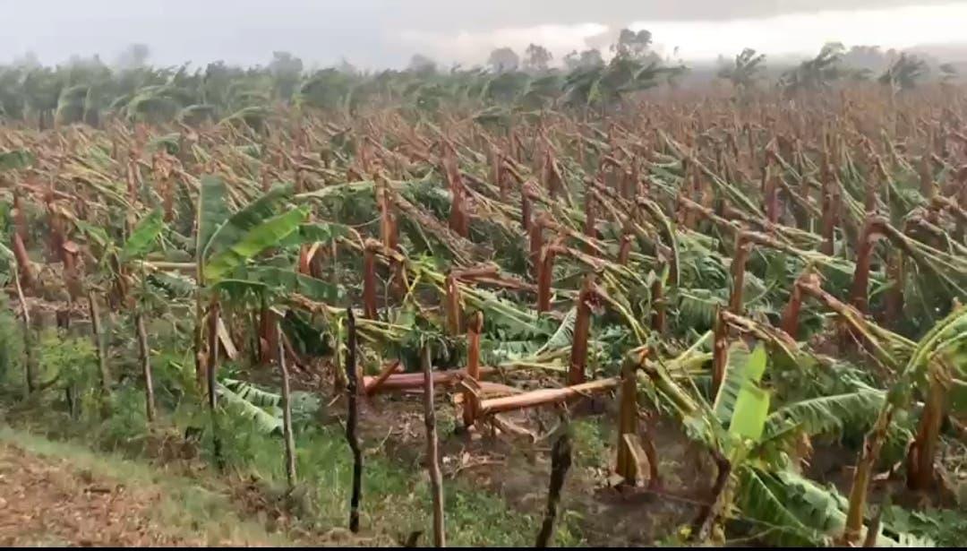 Ministro de Agricultura evalúa daños causados por tornado en Mao
