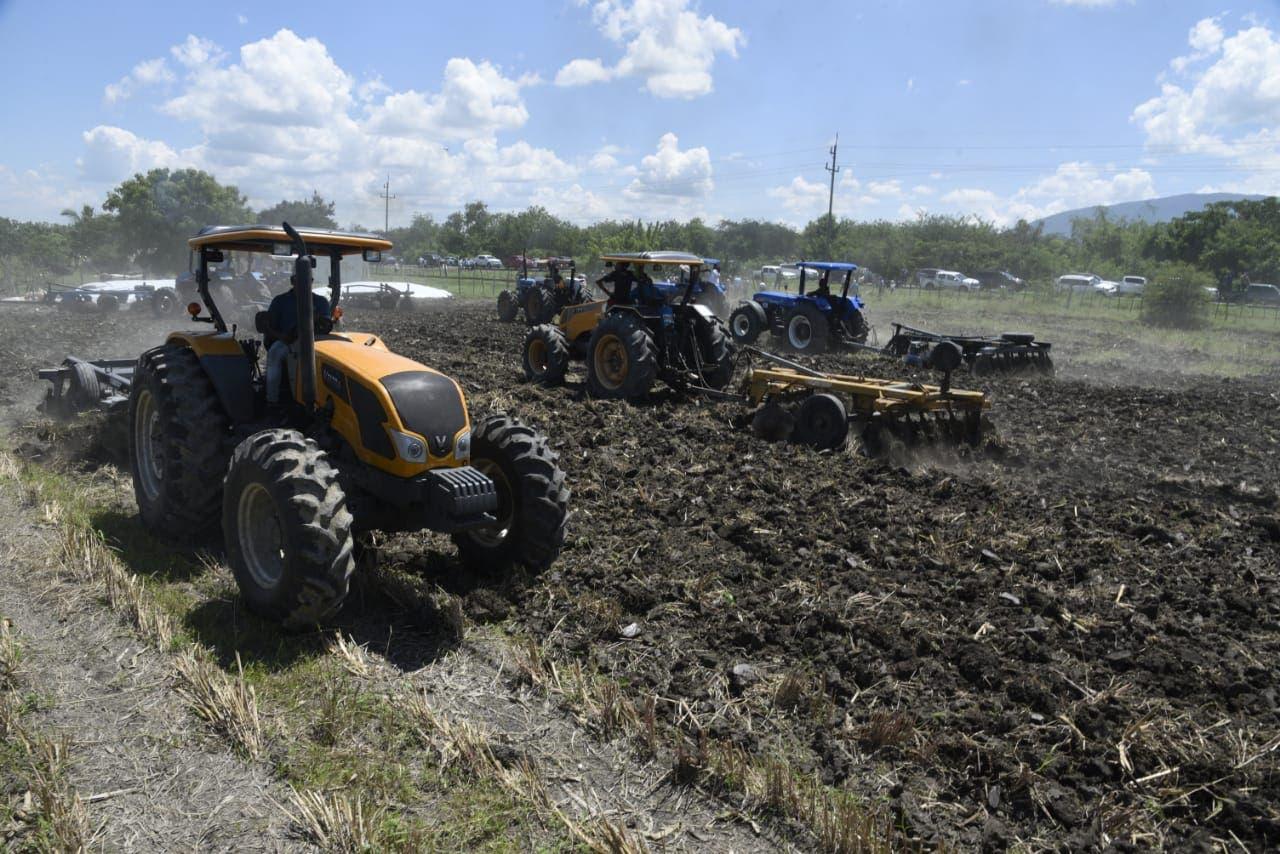 Agricultura prepara 190 mil tareas de tierra para siembra masiva de habichuela en región Suroeste
