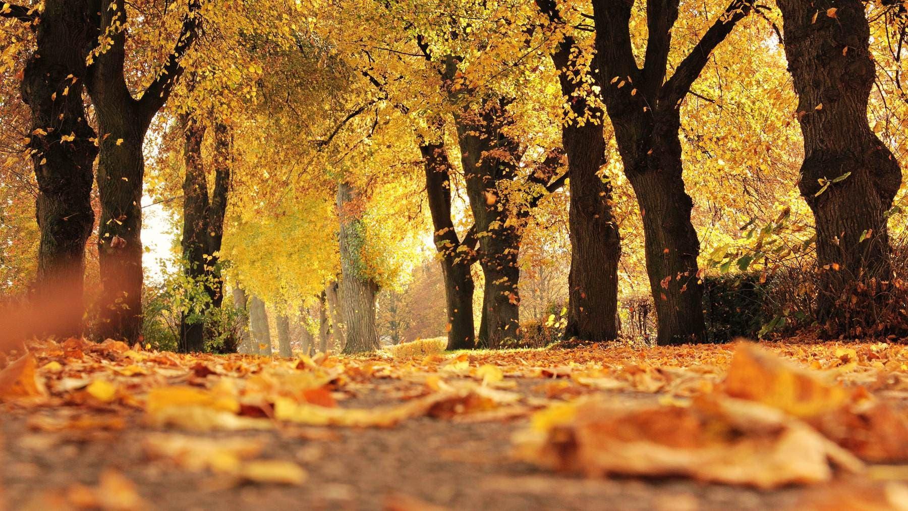 Equinoccio de otoño ¿Qué significa?