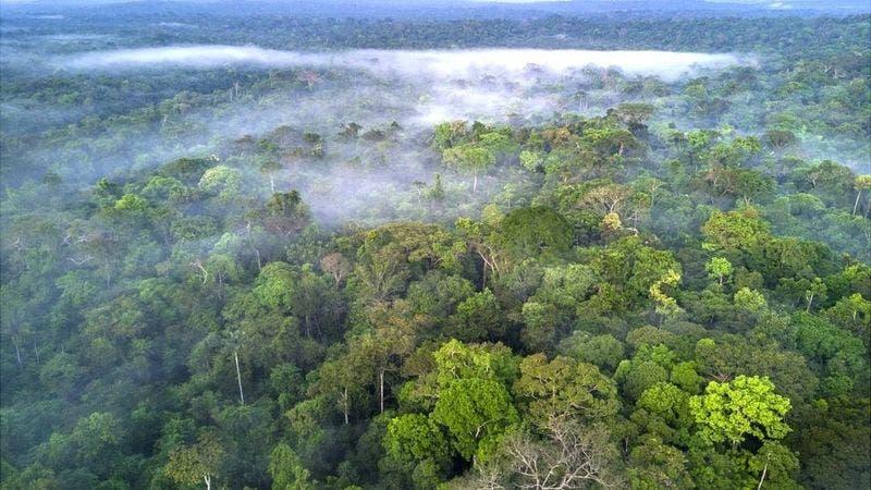 El plan de Facebook para combatir la venta ilegal de tierras en la Amazonía