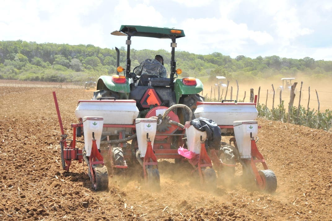 Agricultura siembra de 30 mil tareas de maíz en Puerto Plata