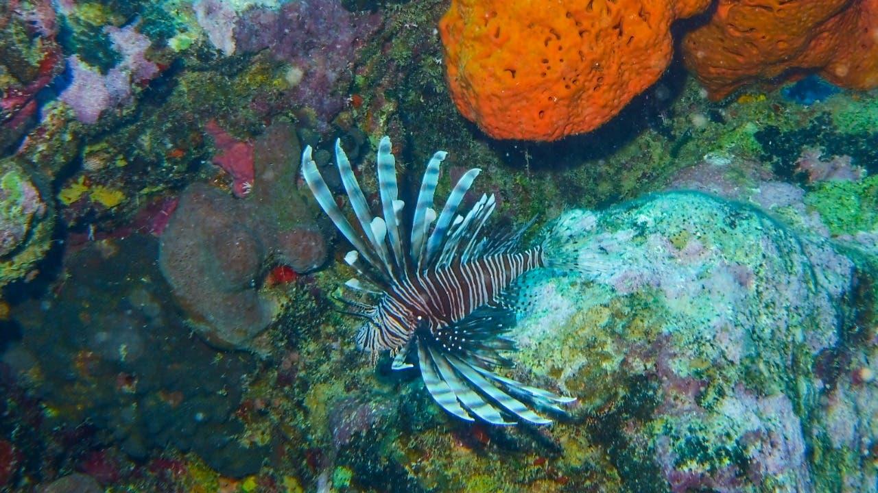 Actividades cerca a los arrecifes generan más de mil millones de dólares al año
