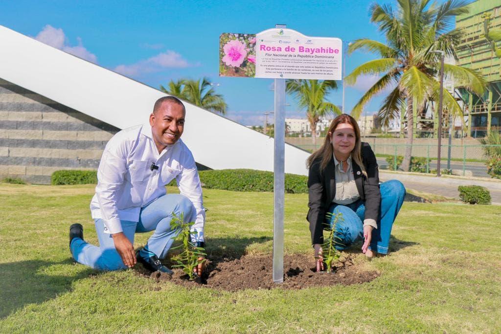 """Promueven la Flor Nacional """"Rosa de Bayahíbe"""" en aeropuertos del país"""